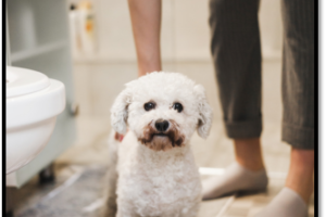 how-to-dog-proof-your-plumbing